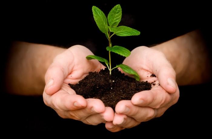 Energía por Biomasa